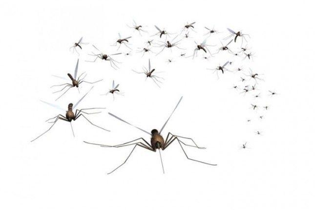 Počelo uništavanje larvi komaraca