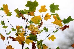 Почела јесен