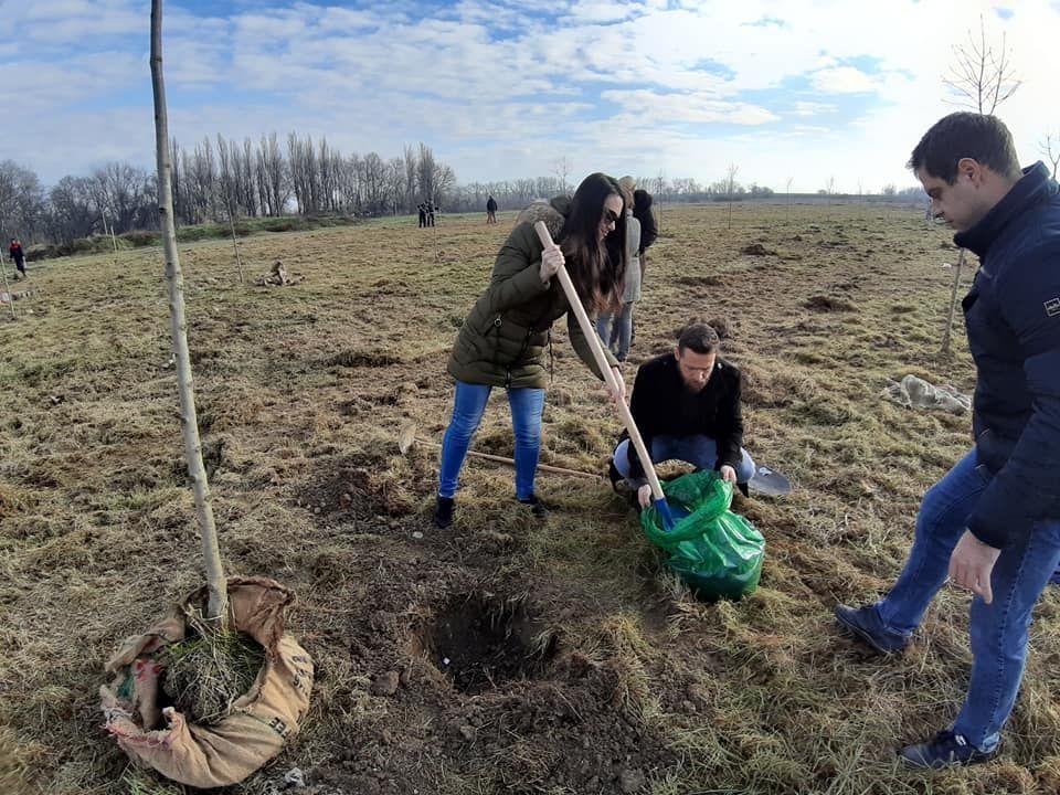 Članovi Saveza mladih Šabac zasadili 20 stabala