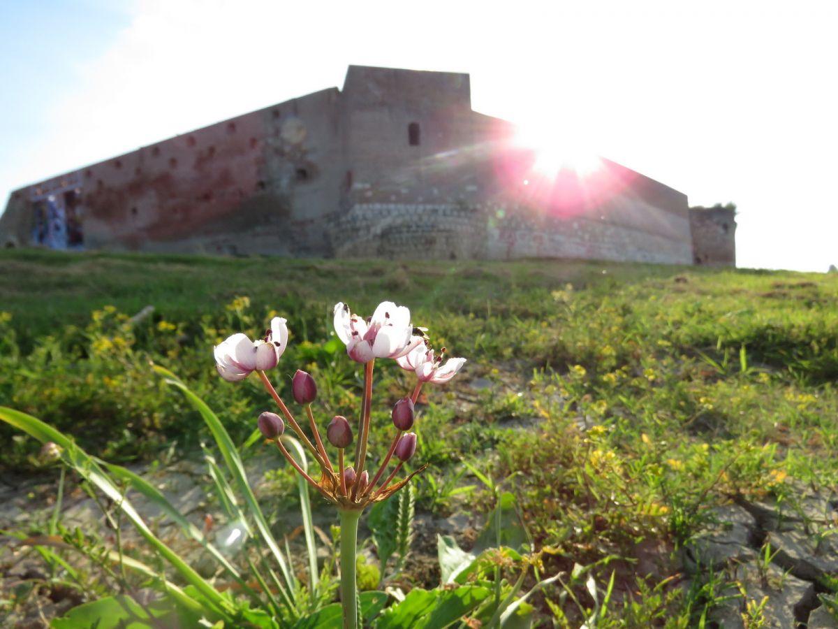 Foto: Glas Podrinja / Šabačka tvrđava (Stari grad)