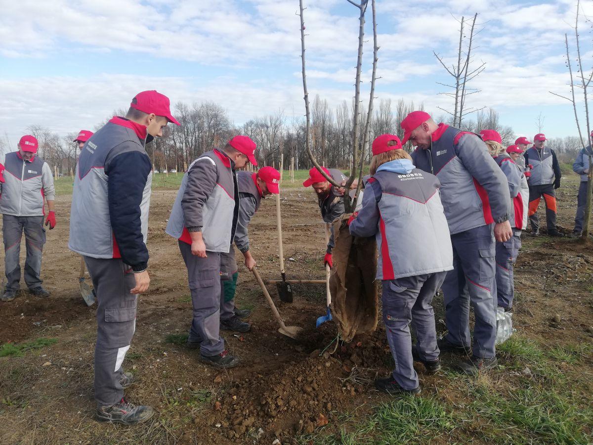 """Настављена акција озелењавања Шапца: """"Зорка керамика"""" донирала 200 садница"""