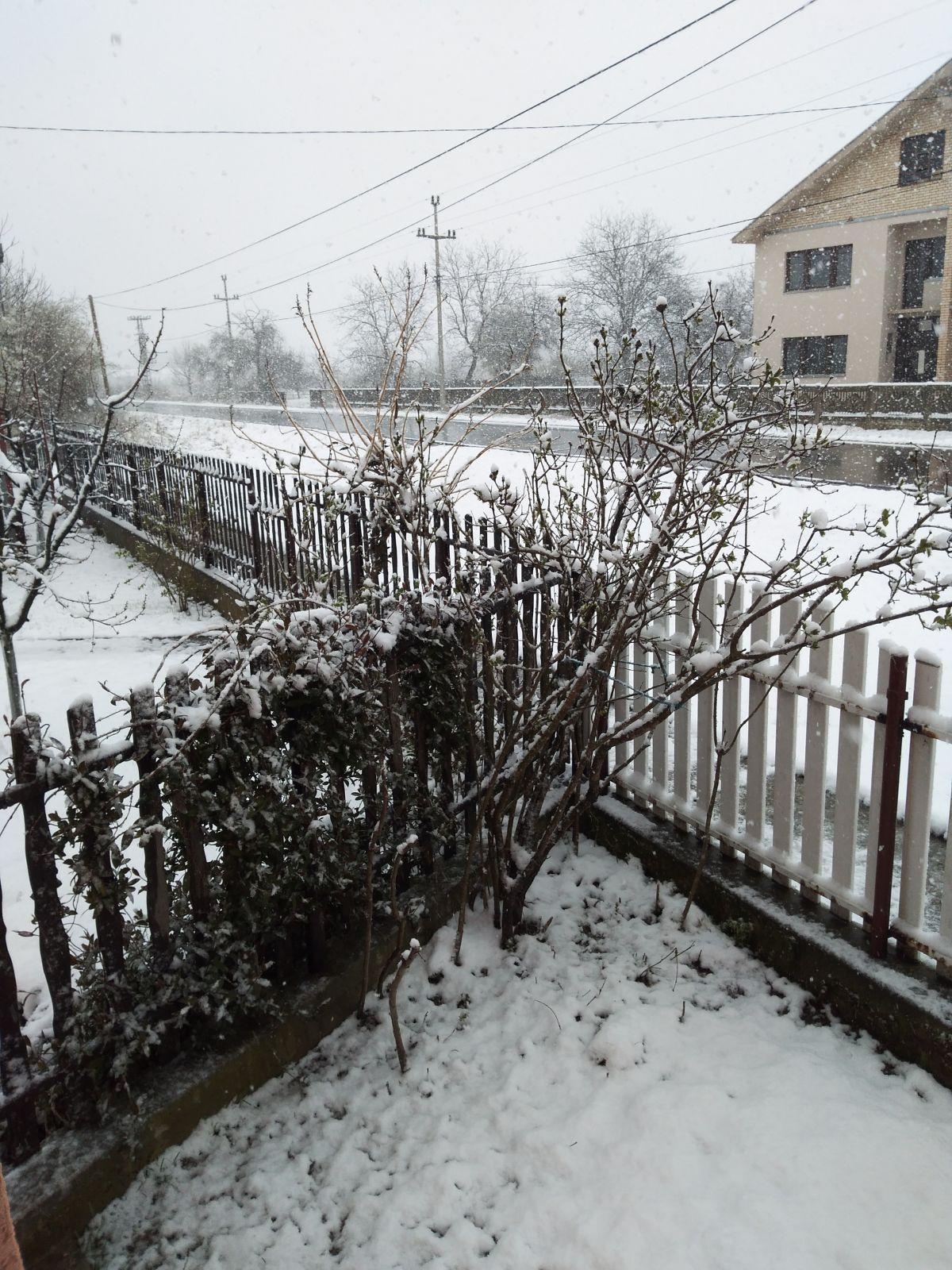 Данас још један ледени дан