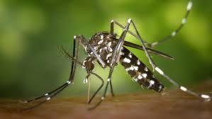 Od virusa Zapadnog Nila umrlo 21