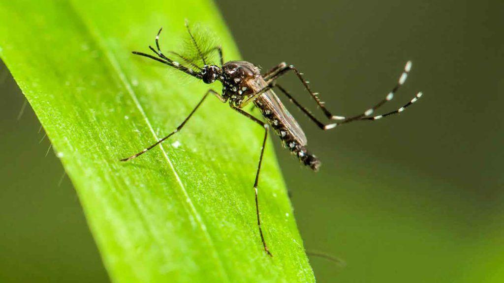 Počinje suzbijanje larvi komaraca