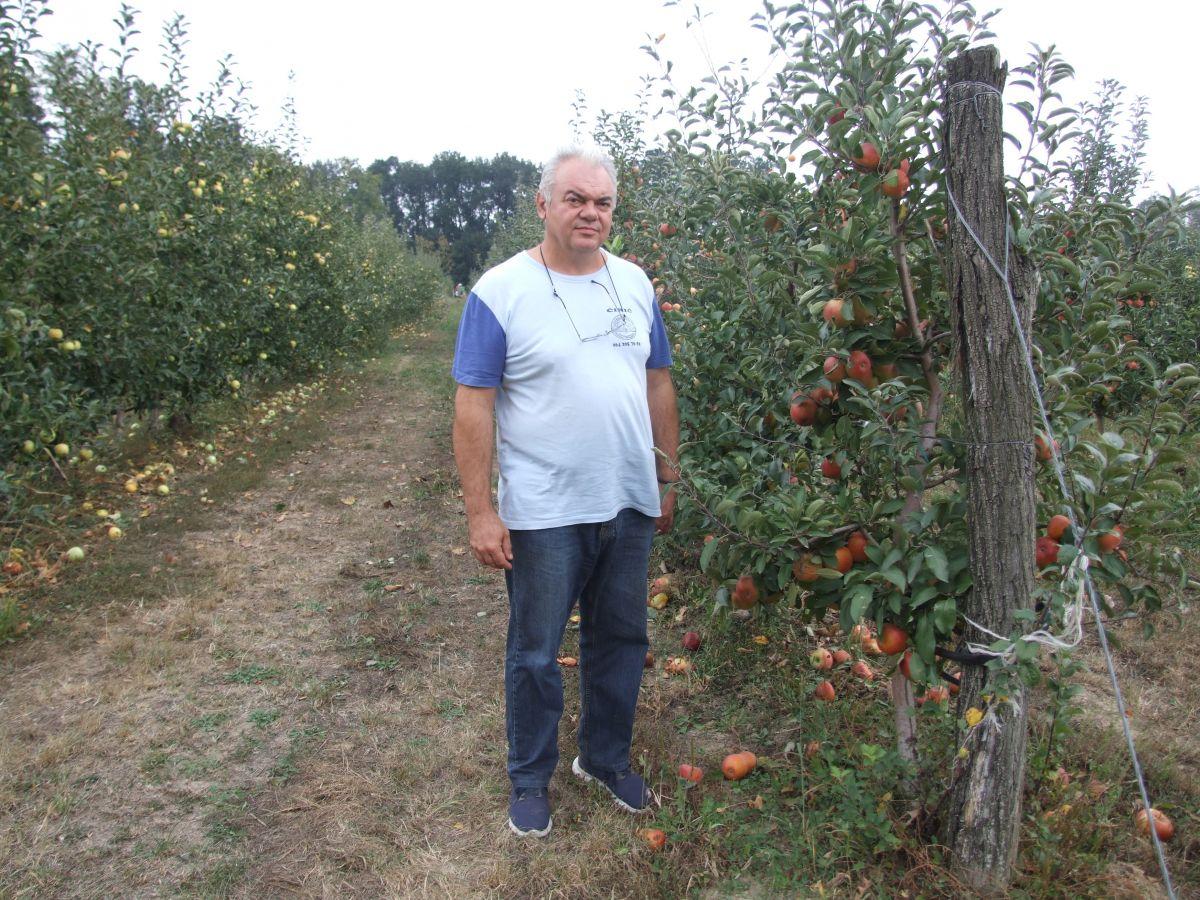 Jabuke zaslužuju  subvencije