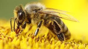 Министарство пољопривреде: Поштујте правила пролећног прскања и не угрожавајте пчеле