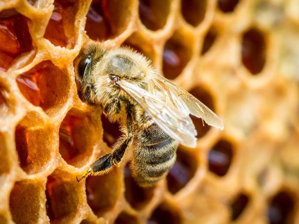 Сутра прскање комараца: Заштитите пчеле
