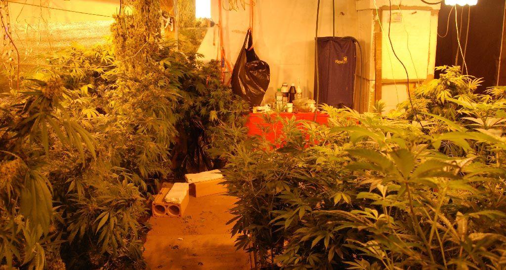Marihuana u Bogatiću