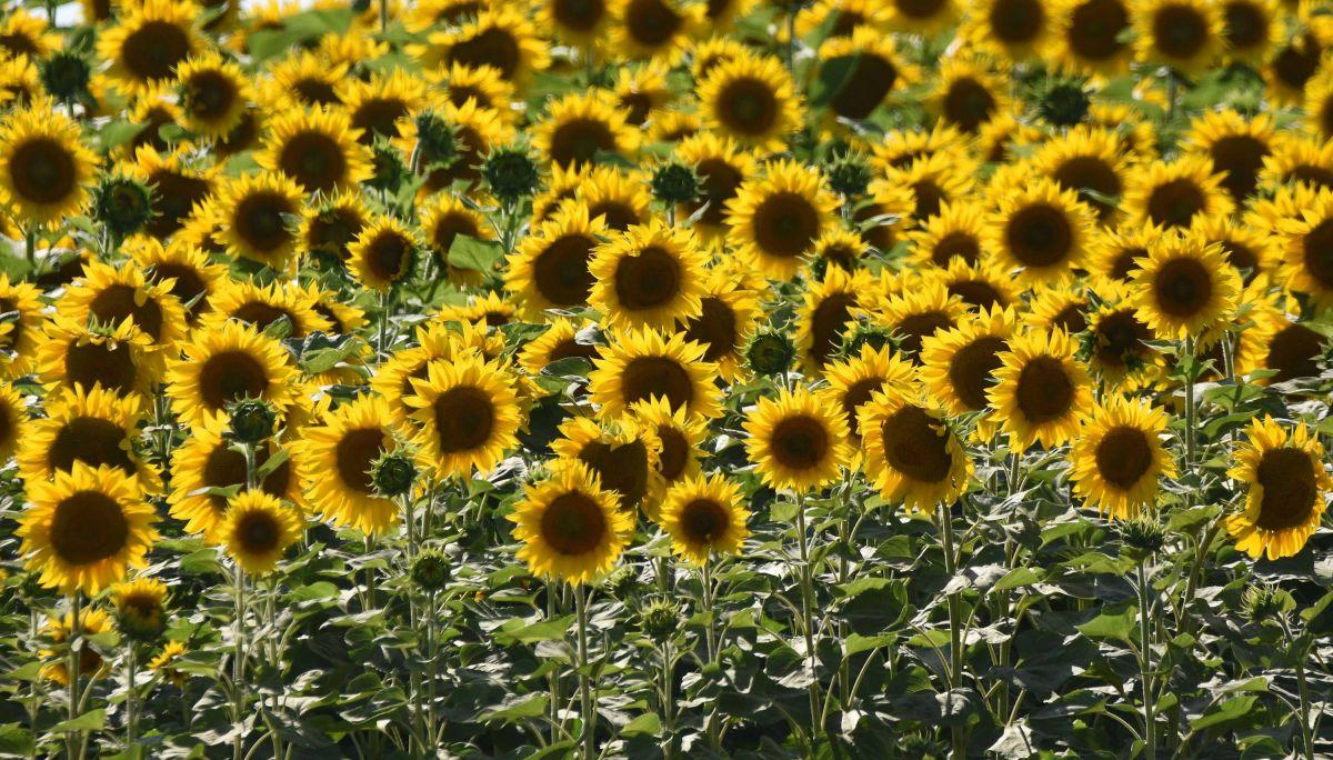 U Srbiji danas uglavnom sunčano