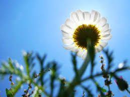 Сутра прeтeжно сунчано и топло