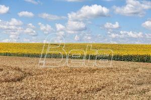 U Srbiji danas pretežno sunčano i toplo vreme