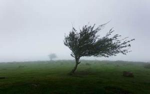 Sutra olujni vetar u košavskom području i na planinama