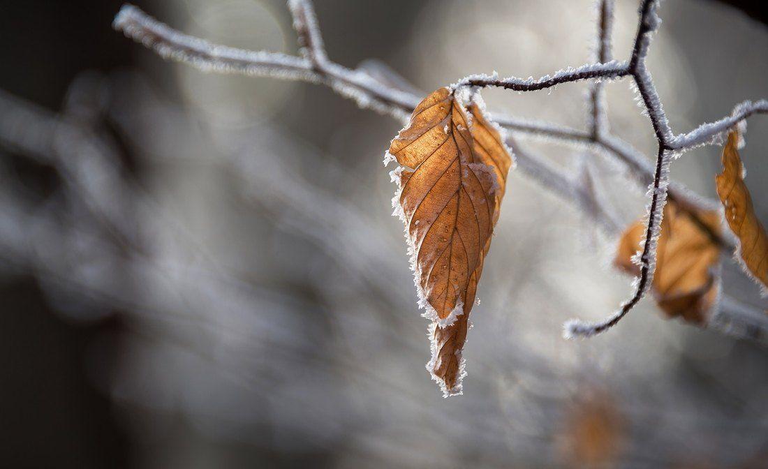 U Srbiji ujutro mraz, promenljivo oblačno i suvo