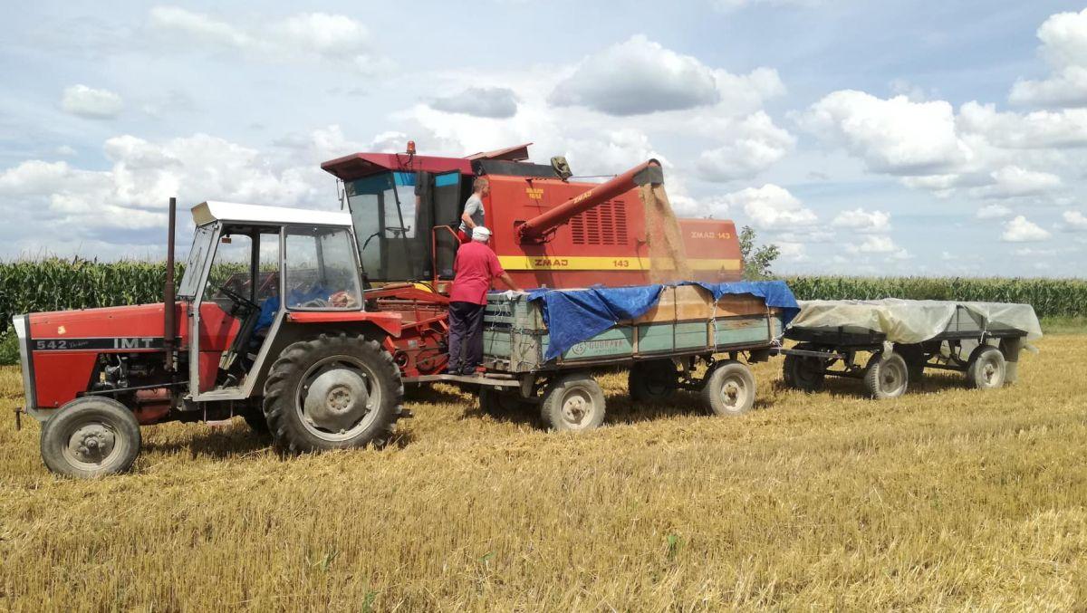 Hlebno žito, seljačka muka