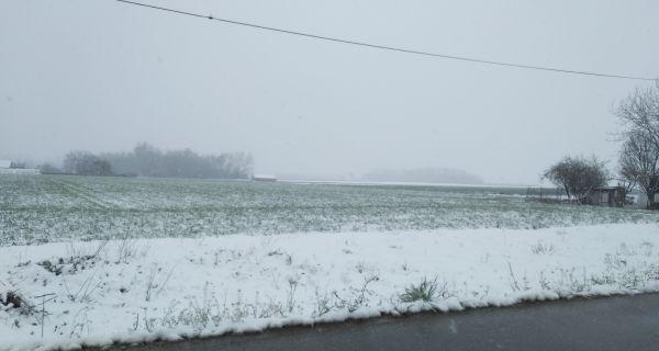 Sneg u proleće godi pšenici