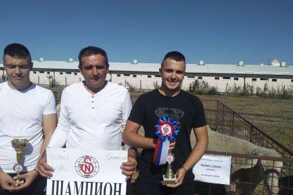 Šampioni ovnovi Mića i Miki i kolekcija ovaca Virtemberg rase Gorana Čolića iz Bogatića