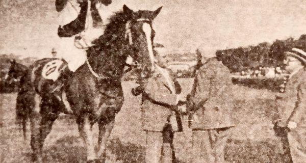 Коњи мајора Добре