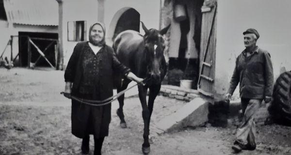 """Marjanovića konji preplivali """"veliku baru"""""""