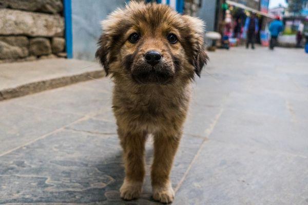 Одржан скуп за права животиња у центру Новог Сада