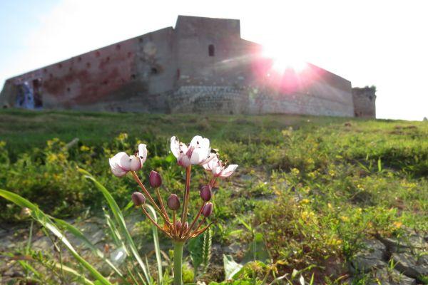Danas na zapadu i severu Srbije pretežno sunčano, temperatura do 17