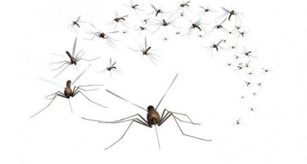Почело уништавање ларви комараца