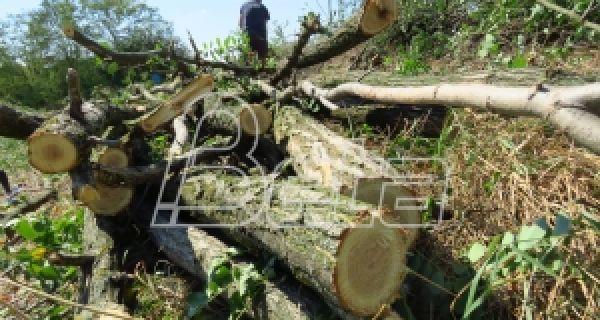 Агенција за енергетику: У Србији најјефтиније грејање на дрва, најскупље на струју