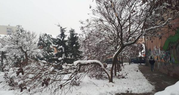 Стабла пуцају под теретом снега