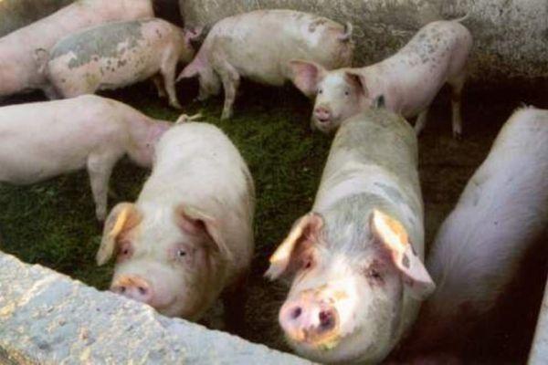 Mačvanima zakasnela intervencija Ministarstva poljoprivrede