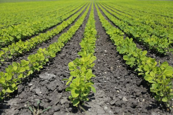 Osnovni podsticaji u biljnoj proizvodnji