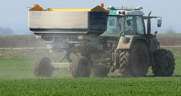 Прихрана пшенице у Мачви