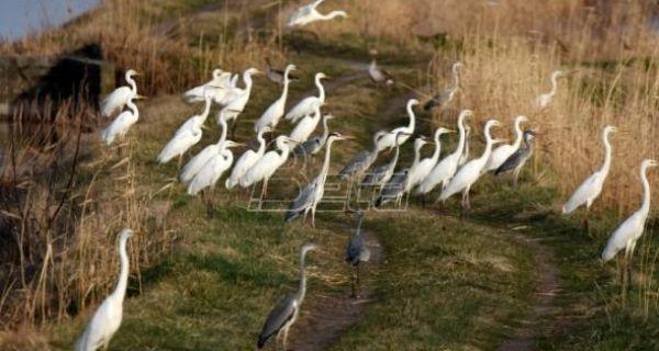 Зелена Србија: Пестицид фурадан уништава заштићене врсте птица