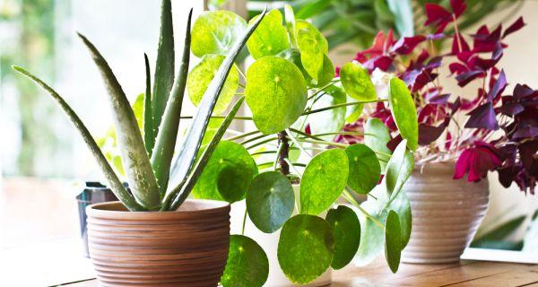 Биљке су радост