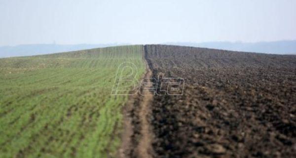 Savković: Pšenici nedostaje vlage