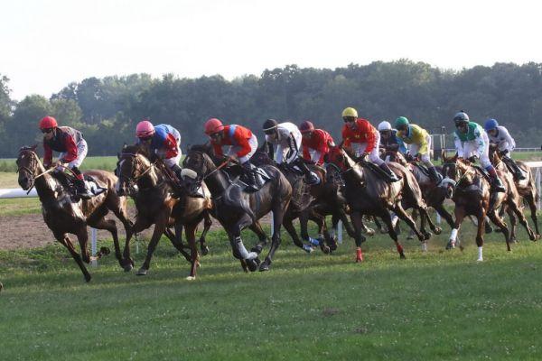 На Хиподрому у Шапцу у јеку припреме брзих коња