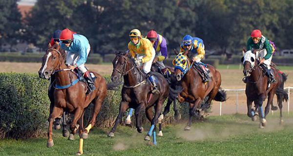 Посебно значење за љубитеље коњичког спорта