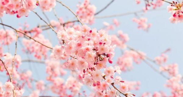 Prolećni, aprilski dan