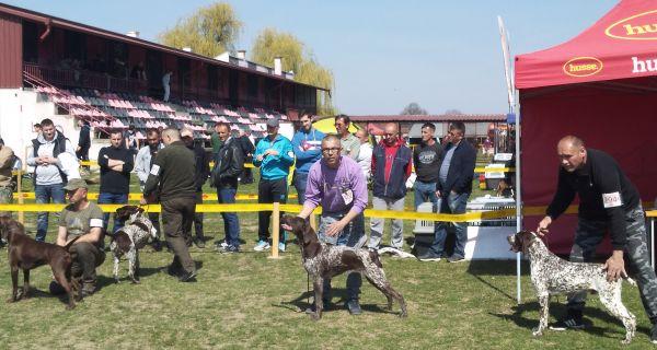 Међународна изложба паса свих раса CACIB Богатић 2019.