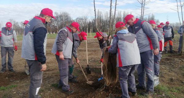 """Nastavljena akcija ozelenjavanja Šapca: """"Zorka keramika"""" donirala 200 sadnica"""