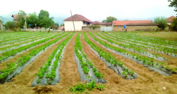 Poljoprivrednici beru plodove saradnje sa Šapcem