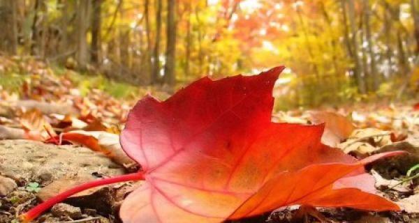Сутра стиже јесен