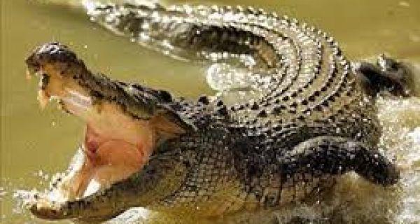 Крокодил у тоалету