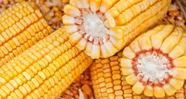 Цену кукуруза подигли  финансијски фондови