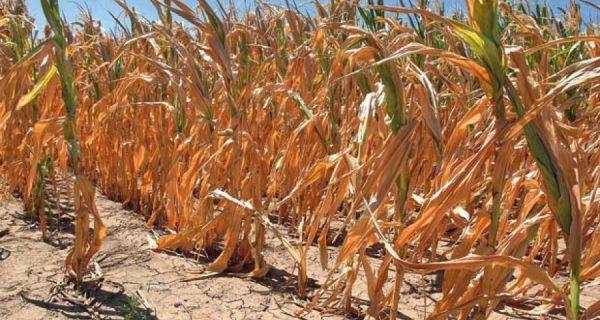 Штета од суше у Србији милијарду евра