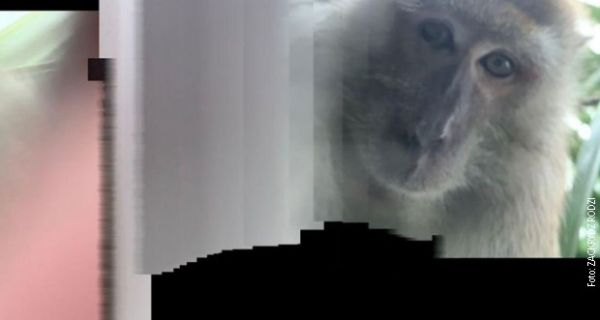 Мајмун украо студенту телефон па правио селфије