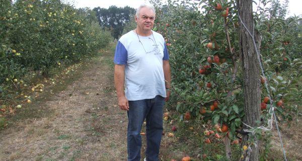 Јабуке заслужују  субвенције