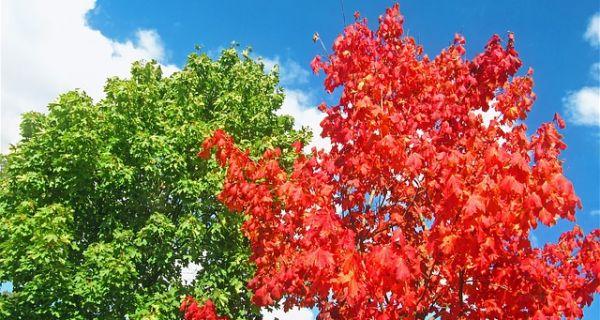 Jesen kuca na vrata i meteorološki