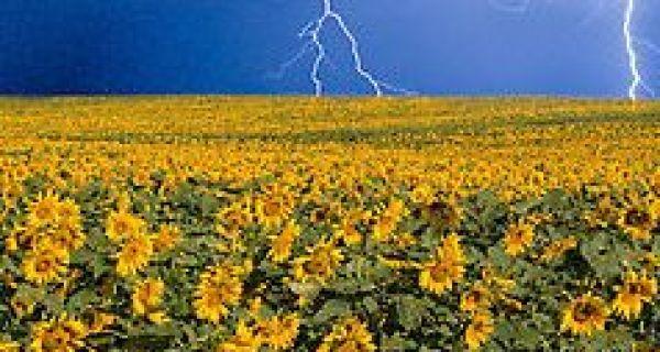 Апел српским пољопривредницима да осигурају своје усеве