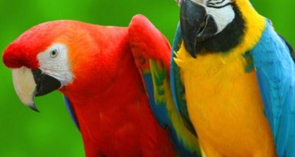 Шверцовао папагаје