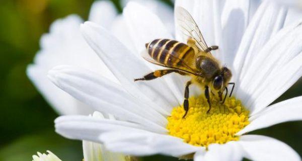 SAČUVAJMO PČELE OD UTICAJA SREDSTAVA ZA ZAŠTITU BILjA