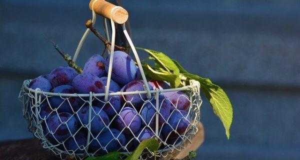 ПКС: Подбацио род воћа